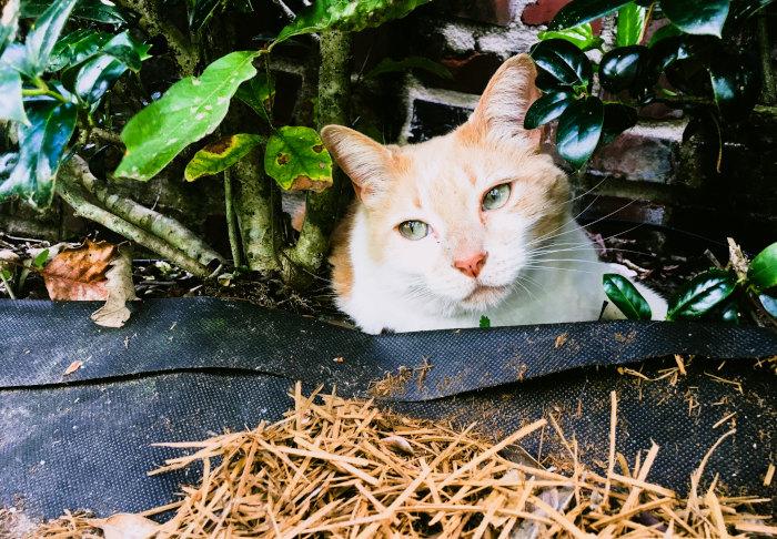 Katze versteckt unter Stroh
