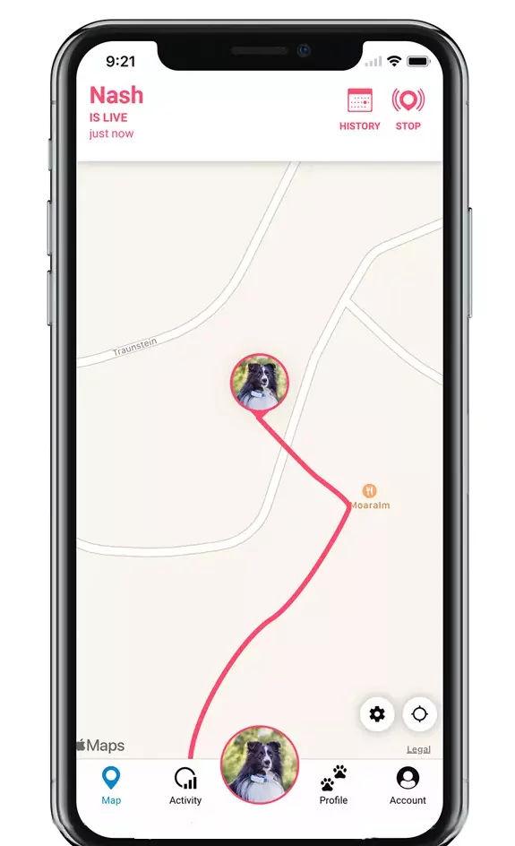 live-tracking Hund mit GPS tracker bei Ausreißer
