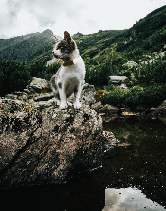 Katze mit GPS tracker im Gebirge